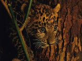 Wildlife Paintings