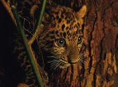 Картины дикой природы